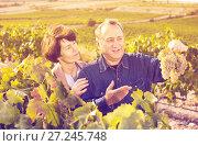 Купить «Family of elderly wine makers on vineyard», фото № 27245748, снято 12 октября 2016 г. (c) Яков Филимонов / Фотобанк Лори