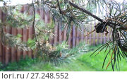 Купить «Spruce branches swaying, wooden fence. Focus shifts from background to the front», видеоролик № 27248552, снято 17 июля 2016 г. (c) Ирина Мойсеева / Фотобанк Лори