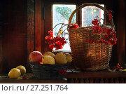Купить «Натюрморт с калиной и яблоками на деревянном подоконнике», фото № 27251764, снято 21 ноября 2019 г. (c) Марина Володько / Фотобанк Лори