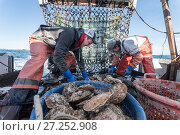 Купить «Fishermen harvesting scallops from a scallop dredge on a scallop boat. Cousins Island, Maine, USA, January. Model released.», фото № 27252908, снято 24 мая 2018 г. (c) Nature Picture Library / Фотобанк Лори