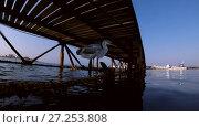 Купить «Arabian Reef-egret or Western Reef Heron (Egretta gularis schistacea) sits on a pier and loks under water on the school of fish - underwater split level, Red sea, Marsa Alam, Abu Dabab, Egypt», видеоролик № 27253808, снято 29 октября 2017 г. (c) Некрасов Андрей / Фотобанк Лори