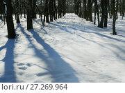 Купить «Winter nature, snow and snowy trees», фото № 27269964, снято 1 марта 2016 г. (c) ElenArt / Фотобанк Лори