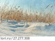 Купить «Winter landscape. Snowy winter field and frozen plants at the sunset, natural sunset winter scene», фото № 27277308, снято 16 июня 2019 г. (c) Зезелина Марина / Фотобанк Лори