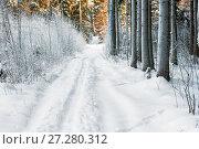 Купить «winter forest in December, trees covered with snow and a path», фото № 27280312, снято 26 января 2014 г. (c) Константин Лабунский / Фотобанк Лори