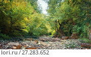 Купить «Горная река в лесу», фото № 27283652, снято 27 сентября 2017 г. (c) виктор химич / Фотобанк Лори