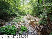 Купить «Горная река в лесу», фото № 27283656, снято 27 сентября 2017 г. (c) виктор химич / Фотобанк Лори