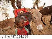 Купить «Two Ouled Rachid boys with domestic donkeys, Bon Village, Zakouma National Park, Chad, 2010.», фото № 27284356, снято 23 мая 2018 г. (c) Nature Picture Library / Фотобанк Лори