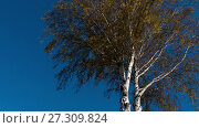 Купить «Autumn trees with yellowing leaves against the sky», видеоролик № 27309824, снято 14 октября 2017 г. (c) Игорь Жоров / Фотобанк Лори