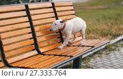 Купить «Lost Puppy Under Rain», видеоролик № 27333764, снято 19 июня 2017 г. (c) Илья Шаматура / Фотобанк Лори