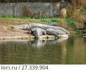 Купить «Лежащие крокодилы у воды», фото № 27339904, снято 3 января 2011 г. (c) Сергей Афанасьев / Фотобанк Лори