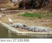 Купить «Лежащие крокодилы у воды», фото № 27339908, снято 3 января 2011 г. (c) Сергей Афанасьев / Фотобанк Лори