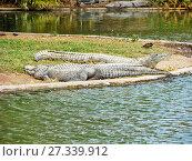 Купить «Лежащие крокодилы у воды», фото № 27339912, снято 3 января 2011 г. (c) Сергей Афанасьев / Фотобанк Лори