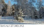 Купить «В лесу родилась елочка. Сибирь», эксклюзивное фото № 27343312, снято 1 января 2018 г. (c) Анатолий Матвейчук / Фотобанк Лори