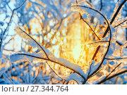 Купить «Иней на ветвях деревьев в лучах заката», фото № 27344764, снято 16 декабря 2017 г. (c) Beerkoff / Фотобанк Лори