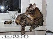 Купить «Кот на подоконнике», фото № 27345416, снято 14 декабря 2017 г. (c) Валерий Денисов / Фотобанк Лори