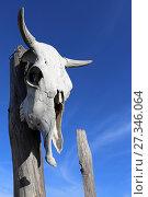 Купить «Череп коровы на старом заборе», эксклюзивное фото № 27346064, снято 12 декабря 2017 г. (c) Алексей Гусев / Фотобанк Лори
