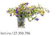 Купить «Melampyrum nemorosum or Ivan-da-Marya. Flowers in glasse. HD video», видеоролик № 27350796, снято 5 января 2018 г. (c) Parmenov Pavel / Фотобанк Лори