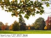 Купить «Autumn leaves and trees in Versailles park», фото № 27357364, снято 17 октября 2017 г. (c) Сурикова Ирина / Фотобанк Лори