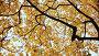 Купить «Yellow tops of maple trees in autumn. A park. Nature. Shooting in motion with electronic stabilization.», видеоролик № 27382032, снято 23 октября 2017 г. (c) Mikhail Davidovich / Фотобанк Лори
