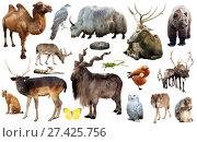 Купить «asia animals isolated», фото № 27425756, снято 20 марта 2019 г. (c) Яков Филимонов / Фотобанк Лори