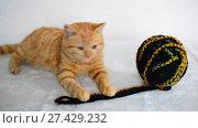 Купить «Red kitten lies near tangle with woolen knitting threads», видеоролик № 27429232, снято 2 января 2018 г. (c) Володина Ольга / Фотобанк Лори