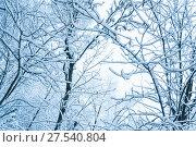 Купить «Заснеженные деревья. Последствия сильного снегопада в Москве», фото № 27540804, снято 31 января 2018 г. (c) Алёшина Оксана / Фотобанк Лори