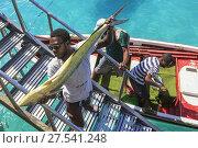 Купить «Local fishermen unloading a fresh catch at the pier at Santa Maria, Sal Island, Salinas, Cape Verde, Africa.», фото № 27541248, снято 15 декабря 2018 г. (c) age Fotostock / Фотобанк Лори