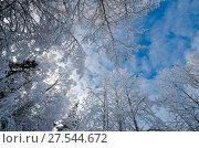 Купить «Кроны заснеженных деревьев на фоне голубого неба», фото № 27544672, снято 1 февраля 2018 г. (c) Яковлев Сергей / Фотобанк Лори