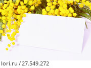 Купить «White card and spring mimosa flowers. Festive spring background for 8 March, Mother's day, Easter. Spring mimosa background», фото № 27549272, снято 10 марта 2016 г. (c) Зезелина Марина / Фотобанк Лори