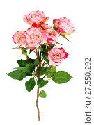Купить «Flower pink roses», фото № 27550292, снято 8 марта 2016 г. (c) ElenArt / Фотобанк Лори