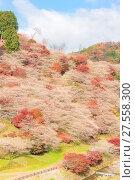 Купить «Nagoya, Obara Sakura in autumn», фото № 27558300, снято 25 июня 2019 г. (c) easy Fotostock / Фотобанк Лори