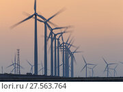 Купить «Huge installations of offshore wind turbines pose another obstacle to migratory shorebirds in the Yellow Sea. Rudong, China. October.», фото № 27563764, снято 28 мая 2018 г. (c) Nature Picture Library / Фотобанк Лори