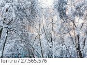Купить «Москва. Деревья в снегу», фото № 27565576, снято 31 января 2018 г. (c) Алёшина Оксана / Фотобанк Лори