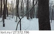 Купить «Moving in winter forest at sunrise», видеоролик № 27572196, снято 12 декабря 2017 г. (c) Михаил Коханчиков / Фотобанк Лори