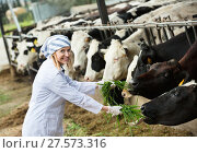 Купить «Young woman feeding cows with grass at cowhouse», фото № 27573316, снято 26 июня 2019 г. (c) Яков Филимонов / Фотобанк Лори