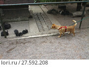 Купить «dog and rabbit», фото № 27592208, снято 25 марта 2019 г. (c) PantherMedia / Фотобанк Лори