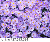 Купить «plant flower texture leaf autumn», фото № 27593324, снято 25 мая 2019 г. (c) PantherMedia / Фотобанк Лори