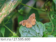 Купить «Beautiful Butterfly in forest», фото № 27595600, снято 22 марта 2019 г. (c) PantherMedia / Фотобанк Лори