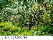 Купить «Tropical Flora in China», фото № 27606844, снято 21 июля 2019 г. (c) easy Fotostock / Фотобанк Лори