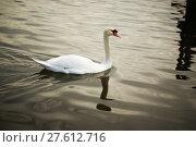 Купить « In the pool , the white swan floats», фото № 27612716, снято 19 марта 2019 г. (c) PantherMedia / Фотобанк Лори