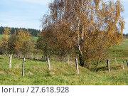 Купить «Birke im Herbst», фото № 27618928, снято 23 июля 2019 г. (c) PantherMedia / Фотобанк Лори