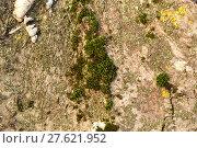 Купить «Moss and lichen on the bark», фото № 27621952, снято 20 февраля 2018 г. (c) PantherMedia / Фотобанк Лори