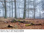 Купить «tree haze snag resin beech», фото № 27623604, снято 22 мая 2019 г. (c) PantherMedia / Фотобанк Лори