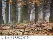 Купить «tree haze snag resin beech», фото № 27623616, снято 22 мая 2019 г. (c) PantherMedia / Фотобанк Лори