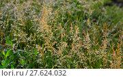 Купить «Wild grass in droplets of water after rain in summer», видеоролик № 27624032, снято 11 июня 2017 г. (c) Володина Ольга / Фотобанк Лори