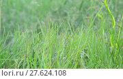 Купить «Grass in droplets of water after rain in summer», видеоролик № 27624108, снято 11 июня 2017 г. (c) Володина Ольга / Фотобанк Лори