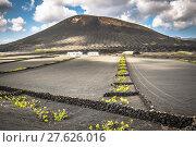 Купить «vineyards in la geria,lanzarote,canary islands,spain.», фото № 27626016, снято 16 декабря 2018 г. (c) PantherMedia / Фотобанк Лори