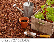 Купить «Watering can, trowel and seedlings over mulch», фото № 27633432, снято 22 мая 2019 г. (c) PantherMedia / Фотобанк Лори