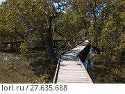 Купить «mangrove forest in australia», фото № 27635688, снято 22 июля 2019 г. (c) PantherMedia / Фотобанк Лори