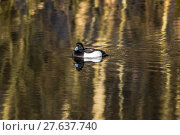 Купить «nature water day outside wildlife», фото № 27637740, снято 19 октября 2018 г. (c) PantherMedia / Фотобанк Лори
